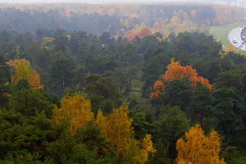 Осенняя пора